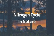 Nitrogen Cycle In Nature