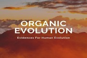 What is Organic Evolution? Give evidences for Human Evolution
