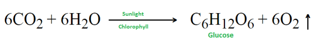 photosynthesis reaction - Define Photosynthesis. Write down the importance of Photosynthesis