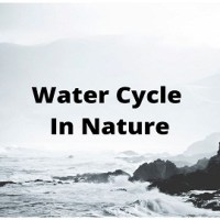 Water Cycle In Nature [Hydrological Cycle]