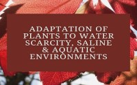 Adaptation of Plants to Water Scarcity, Saline and Aquatic Environments