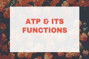 Adenosine Triphosphate And Its Function