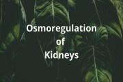 Osmoregulation of Kidneys