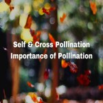 pollination types and importance