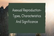 Asexual Reproduction- Types, Characteristics And Significance