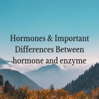 What are hormones? State the main points of differences between hormones and enzymes