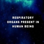 Respiratory organs present in human being