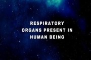 Write the names of the respiratory organs present in human being. Explain them briefly.
