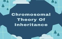 Chromosomal Theory Of Inheritance