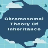 Chromosomal Theory Of Inheritance