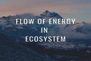 Flow Of Energy In Ecosystem