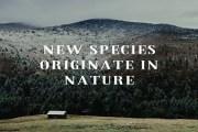 How do new species originate in Nature?