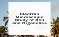 Electron Microscopic Study of Cell and Organelles