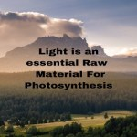 Light is an essential Raw Material For Photosynthesis
