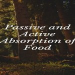 Passive and Active Absorption of Food