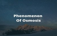 Phenomenon Of Osmosis