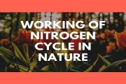Working of Nitrogen Cycle in Nature