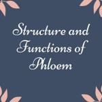Structure and Functions of Phloem