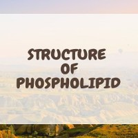 Structure of Phospholipid and their arrangement in Cell membrane