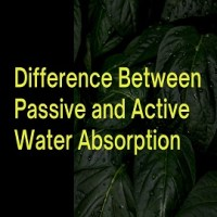 Difference Between Passive and Active Water Absorption