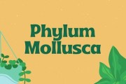 Phylum Mollusca- The Soft-Bodied or Shelled Animals
