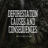 Deforestation Causes and Consequences