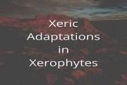 Xeric Adaptations in Xerophytes