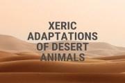 Xeric Adaptations of Desert Animals
