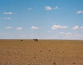 ऑस्ट्रेलिया के सबसे बड़ा रेगिस्तान