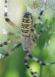 Araignées (7) (Medium)