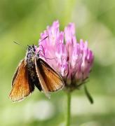 Insectes (3) (Medium)