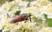 Insectes (5) (Medium)