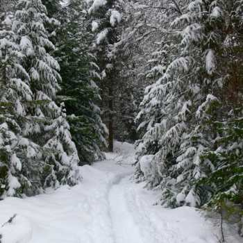 Snowy wooded path