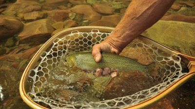 Flathead River Fishing, Cutthroat Trout, Glacier Raft Company