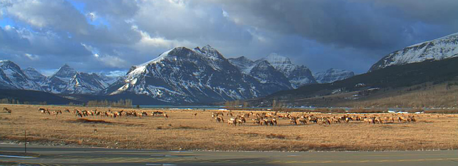 Webcam view of St Mary in Glacier National Park with Elk