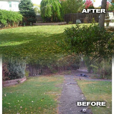 Before and After Back Yard with Sod