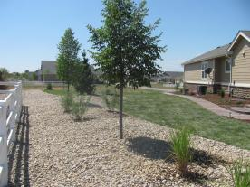 Side Yard Western Sand Cherry and Greenspire Linden Trees