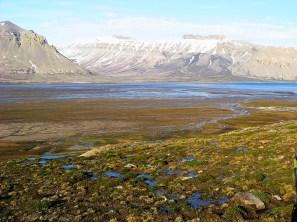 Tundra w okolicy zatoki Petunia (Petuniabukta). Fot. J. Małecki