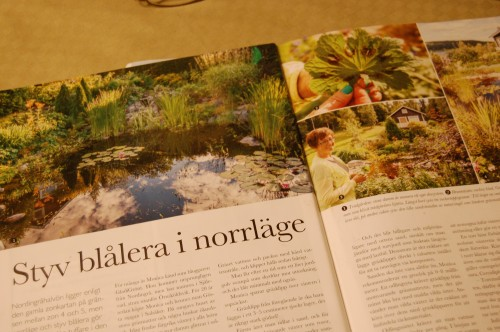 Vär trädgård i trädgård Norr (1)
