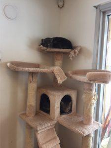 Kattene har det godt på hjelpesenteret. Med utstyr for både lek og avslapping.