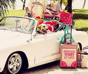 Bil hund packning kul