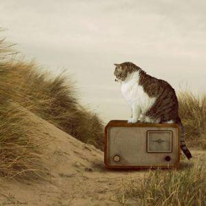Katt radio