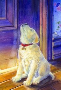 Hund blått