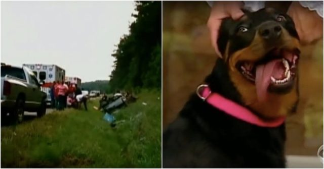 Image result for WOMAN SAVES DOG FROM WRECK. DOG TAKES HER BACK TO WOODS, THEN MAKES A SURPRISING DISCOVERY