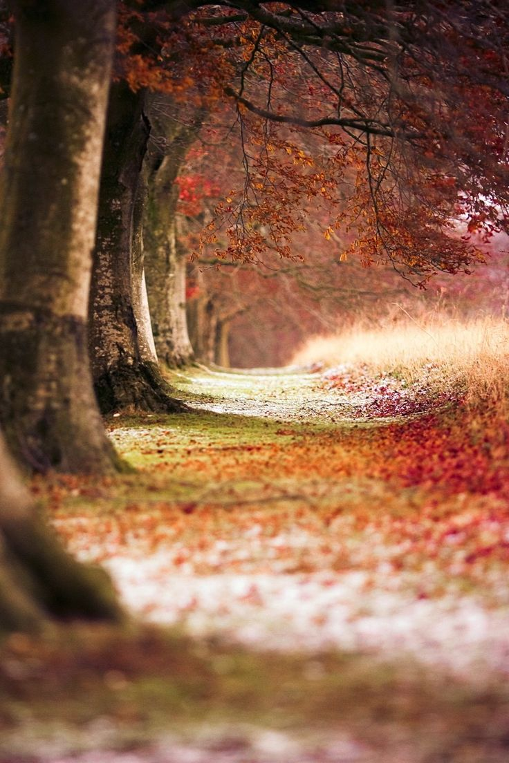 automne-inspiration01