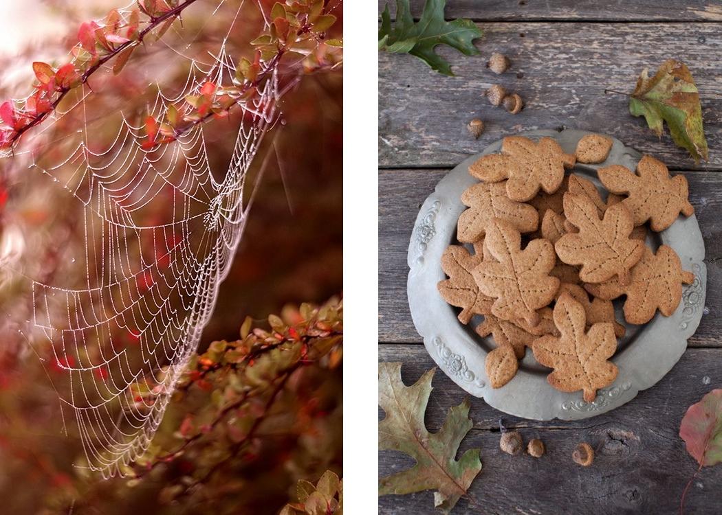automne-inspiration03