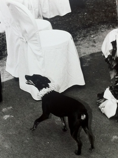 Glam Events dog 1