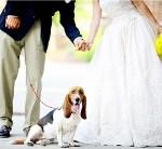 cane invitato al matrimonio Glam Events 1
