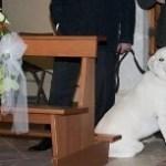 cane tra banchi di chesa glam Events 1
