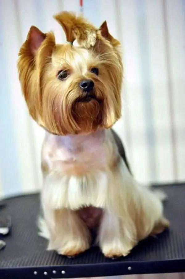 Top 14 Funny Dog Haircuts